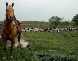 HMI, Healthy Land, Sustainable Future, Horse