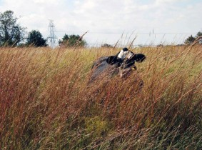 Holistic Planned Grazing has helped tall grass return to the land.