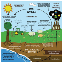 Carbon Cycle Institute Graphic