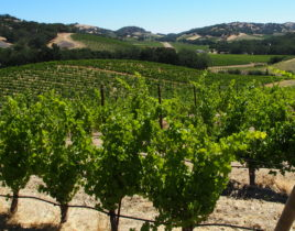 Napa Valley Goes Green(er)